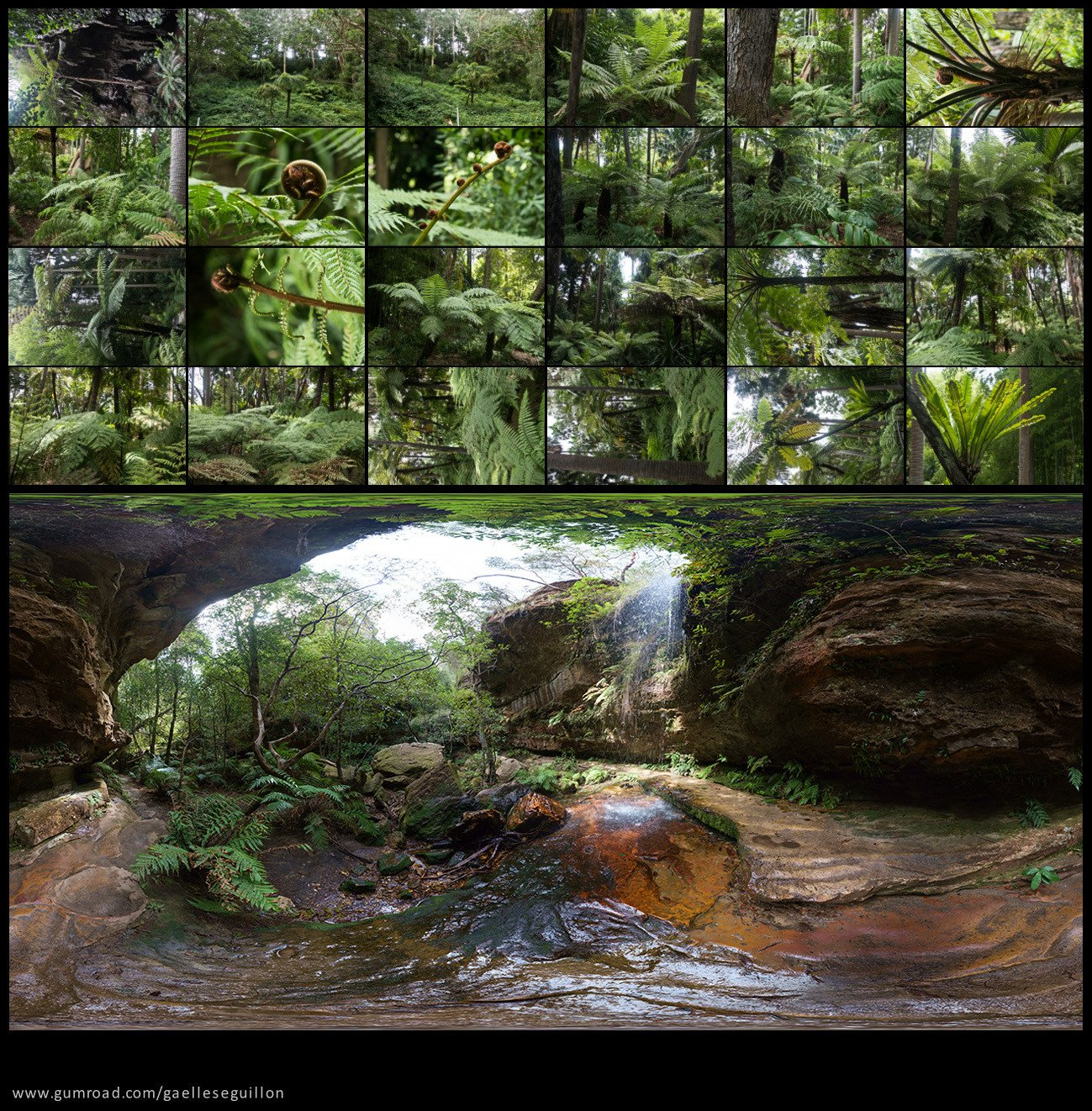 Australian rainforest preview 11
