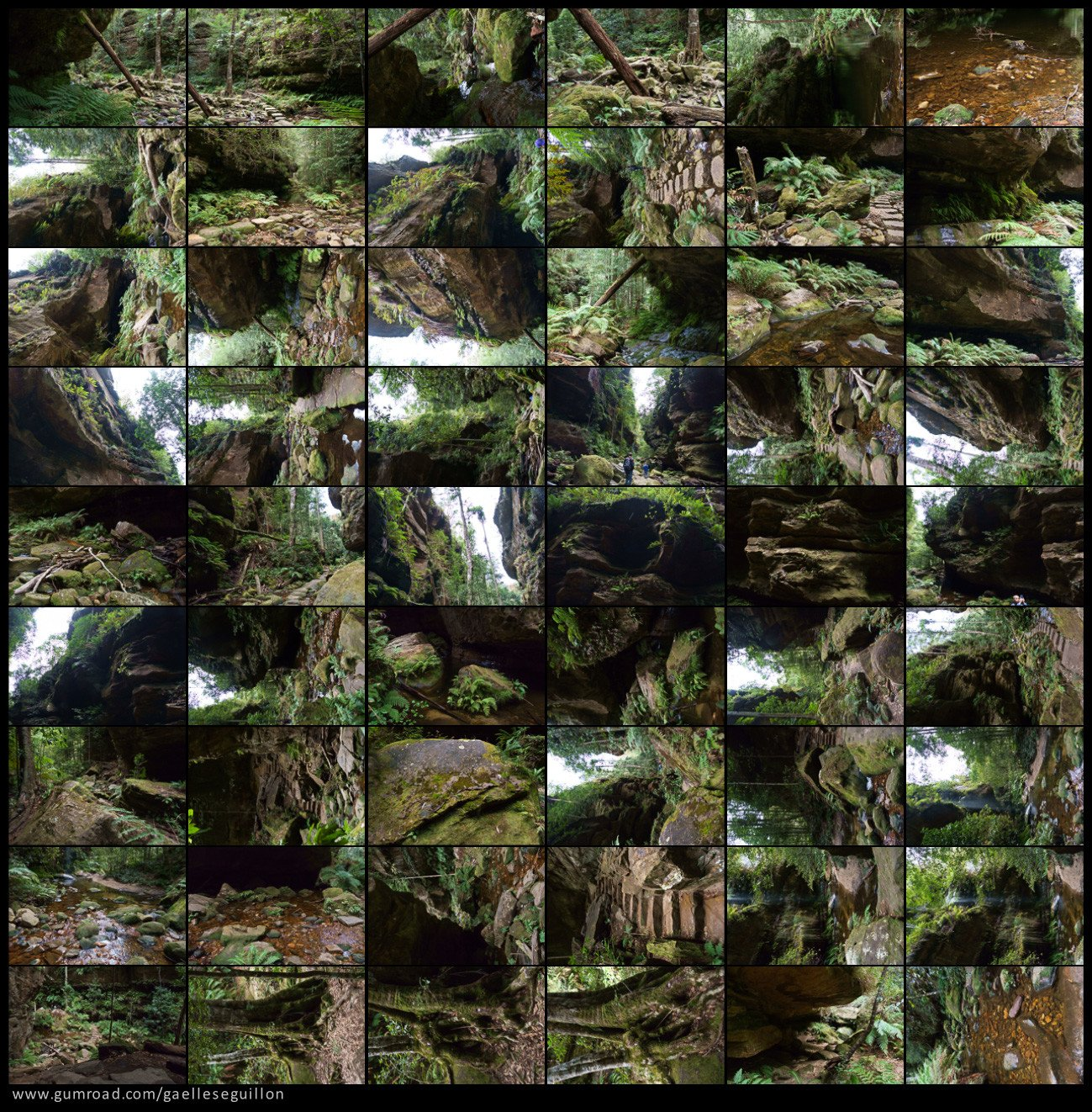 Australian rainforest preview 05