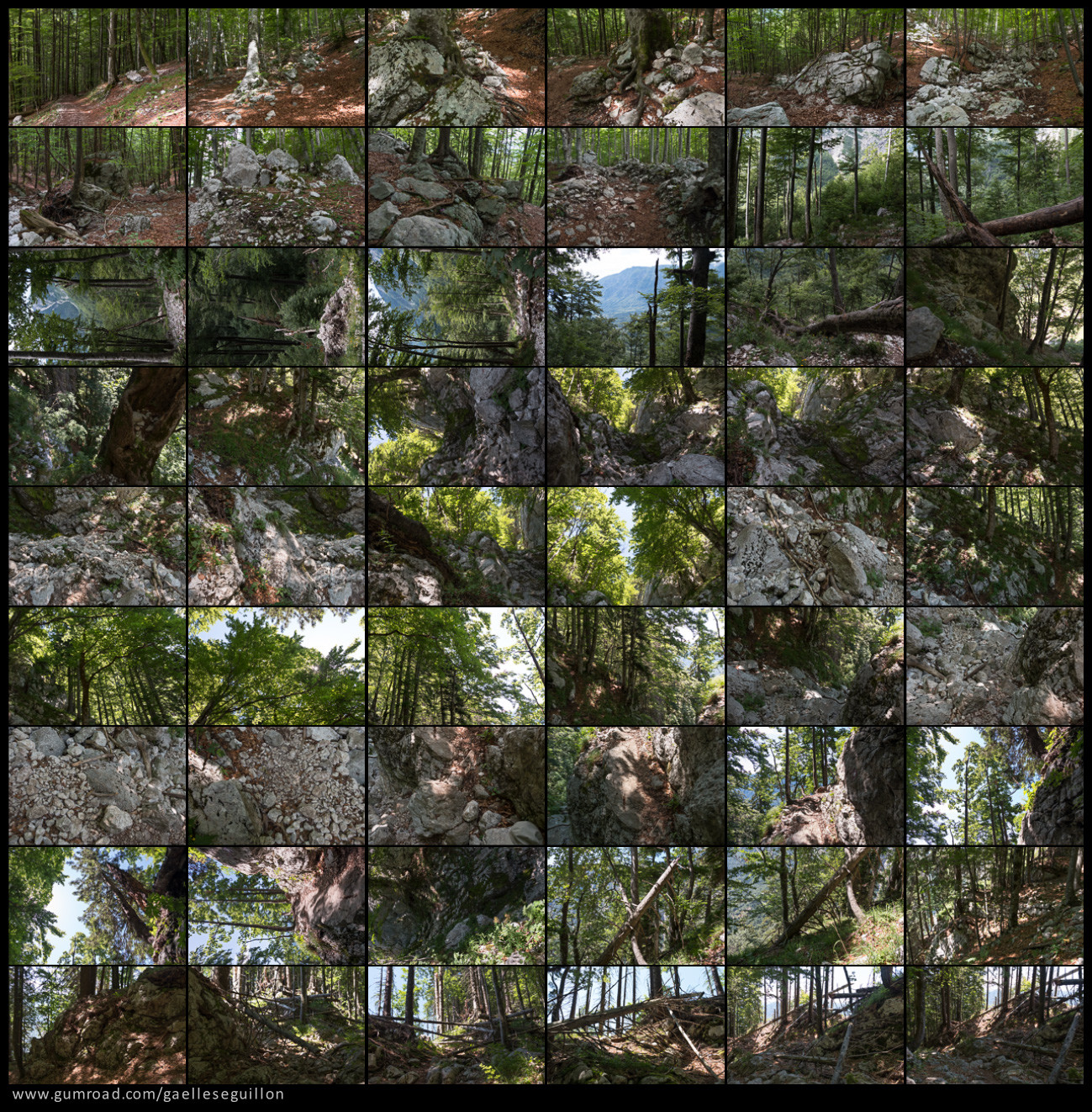 Beech forest preview 1