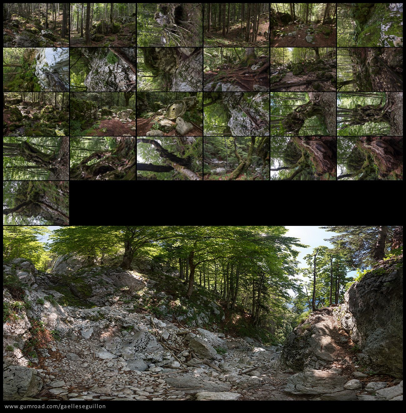 Beech forest preview 5