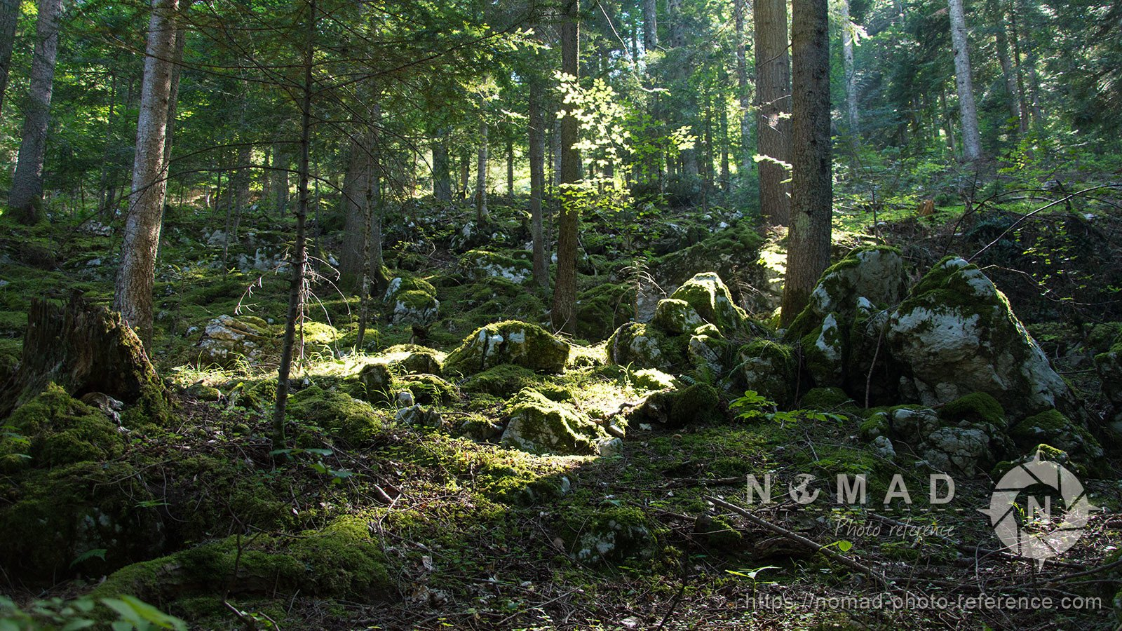 Photo reference pack alpine forest 8