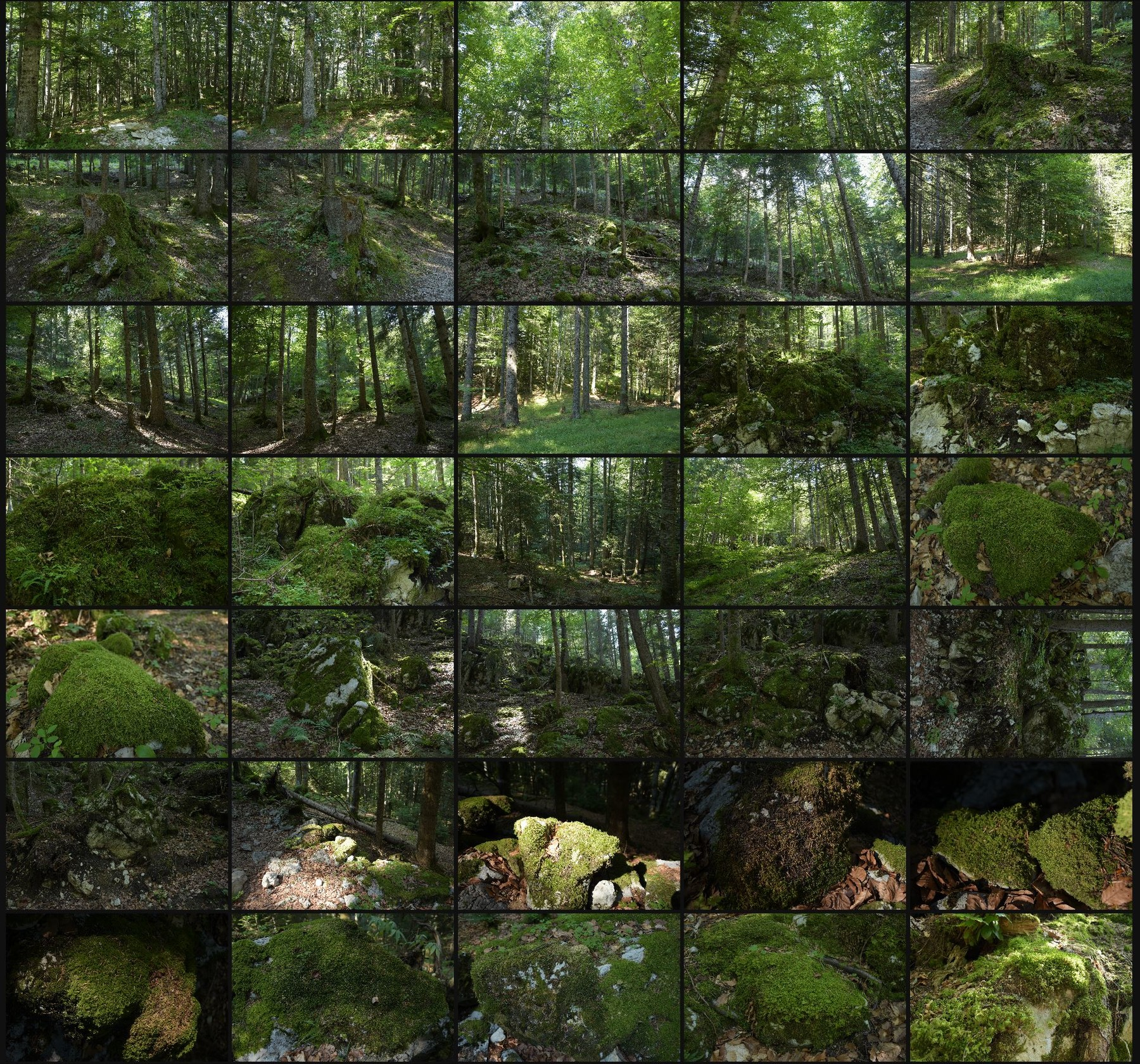 Photo reference pack alpine forest 1