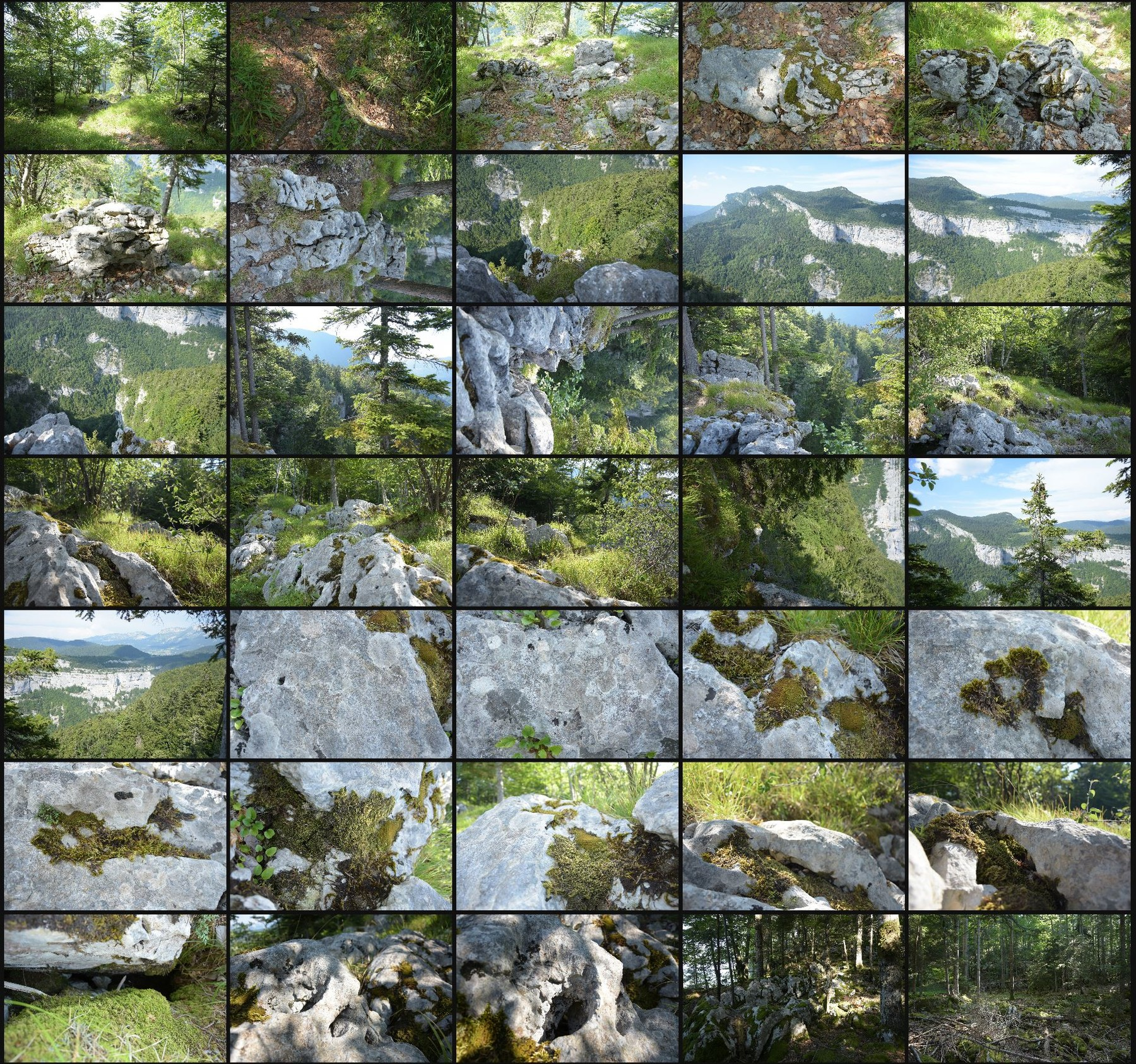 Photo reference pack alpine forest 3