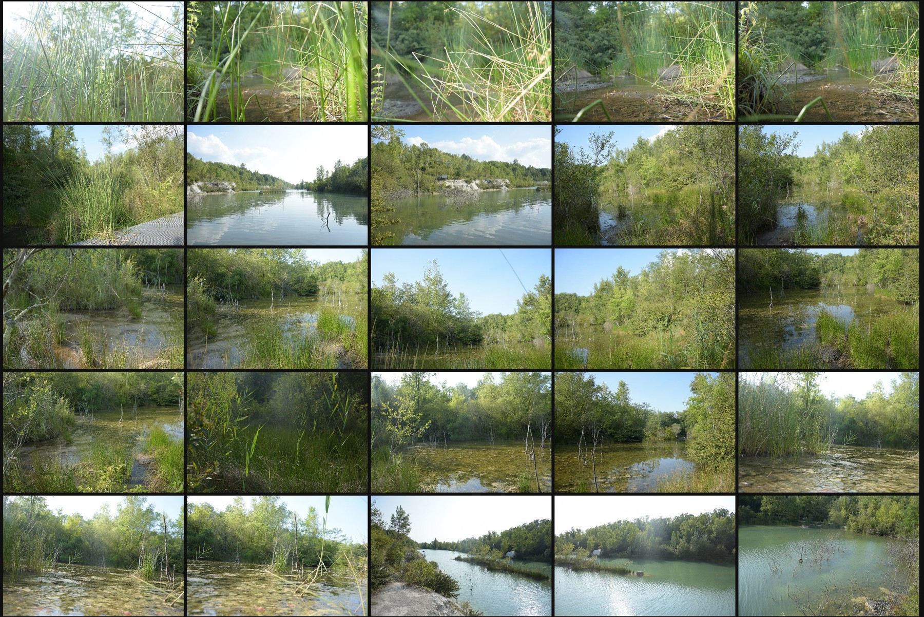 Photo reference pack swamp 3