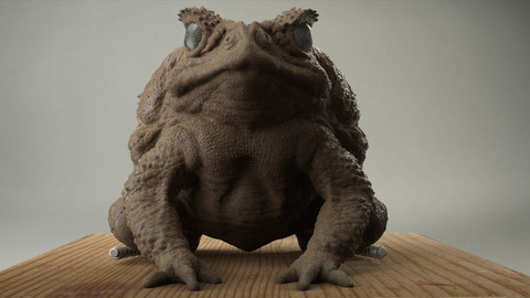 Toad%20frntal