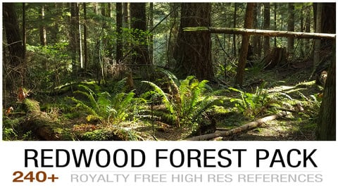 Redwoodforest cover2