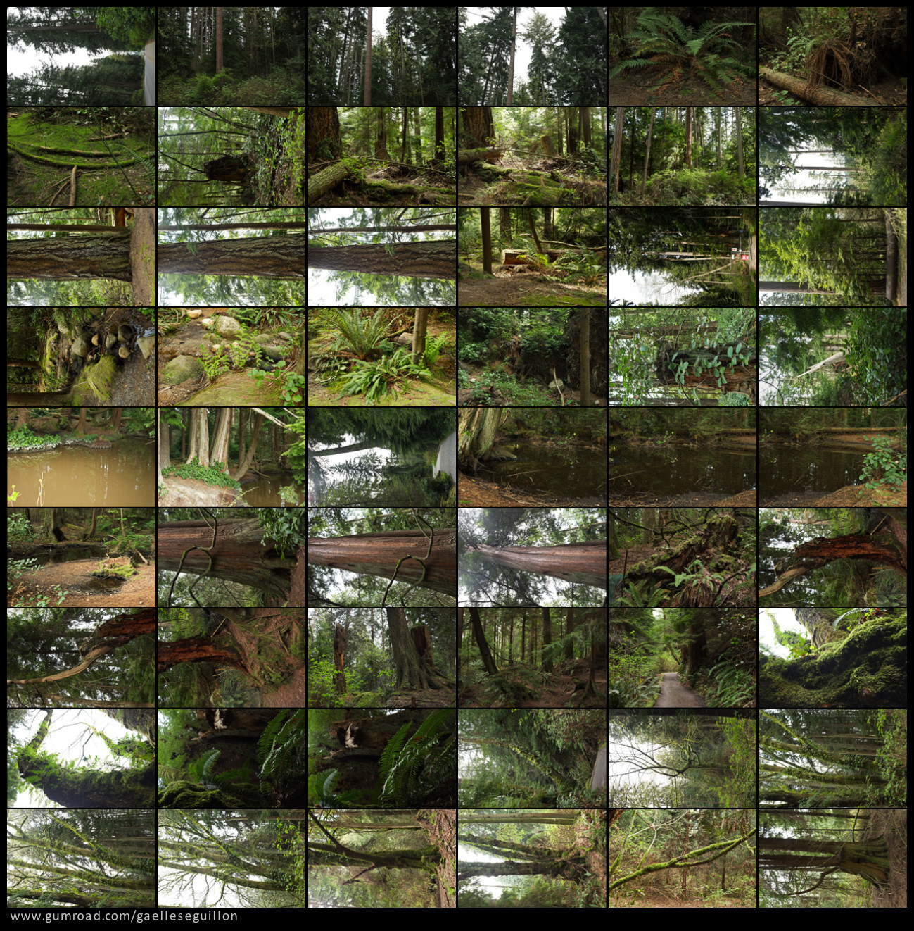 Redwood forest preview 1