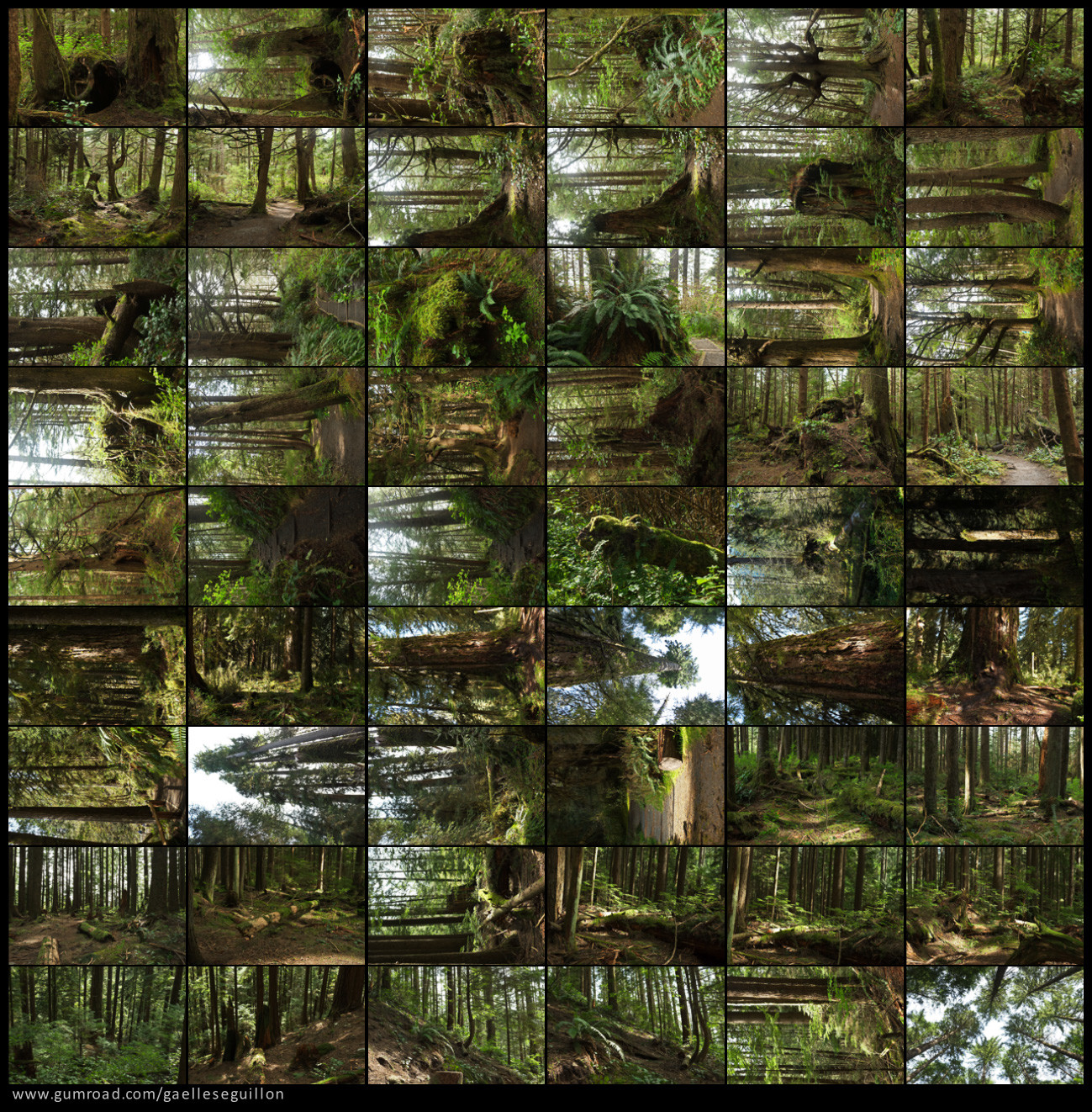 Redwood forest preview 3