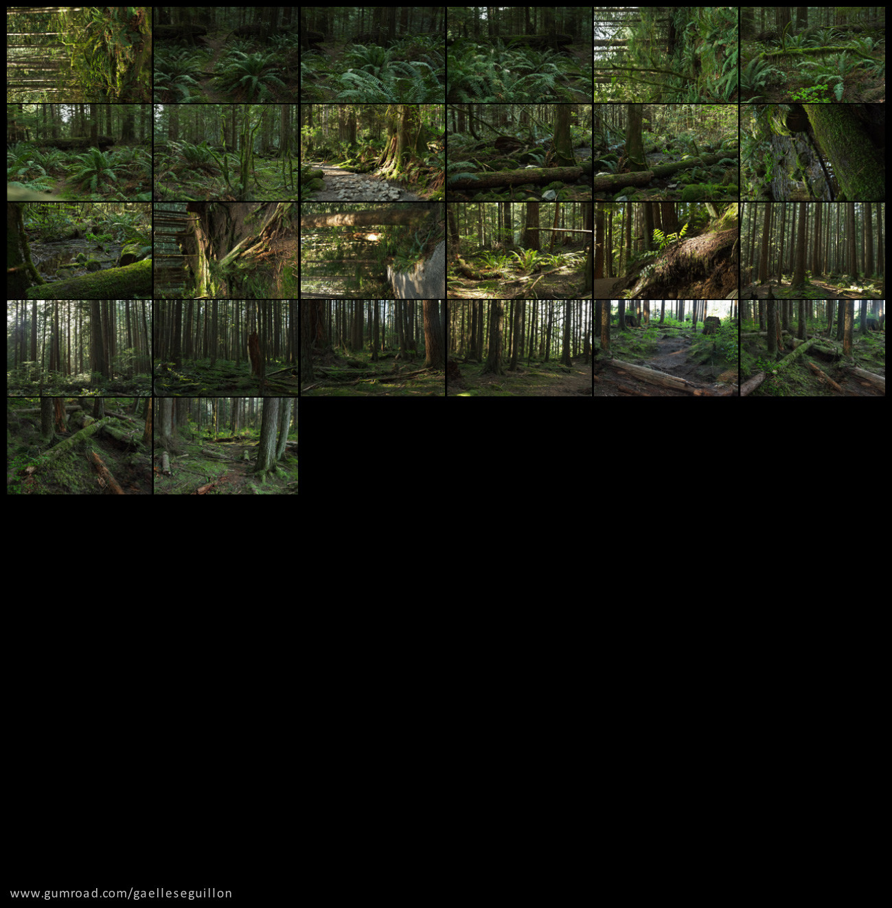 Redwood forest preview 5