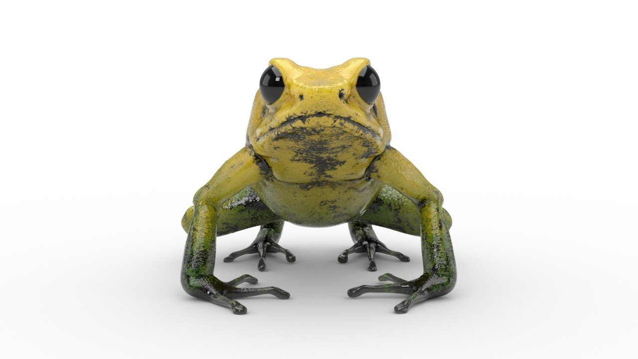 Frog 01