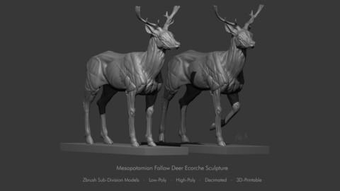 Mesopotamian Fallow Deer Ecorche Anatomy Sculpture