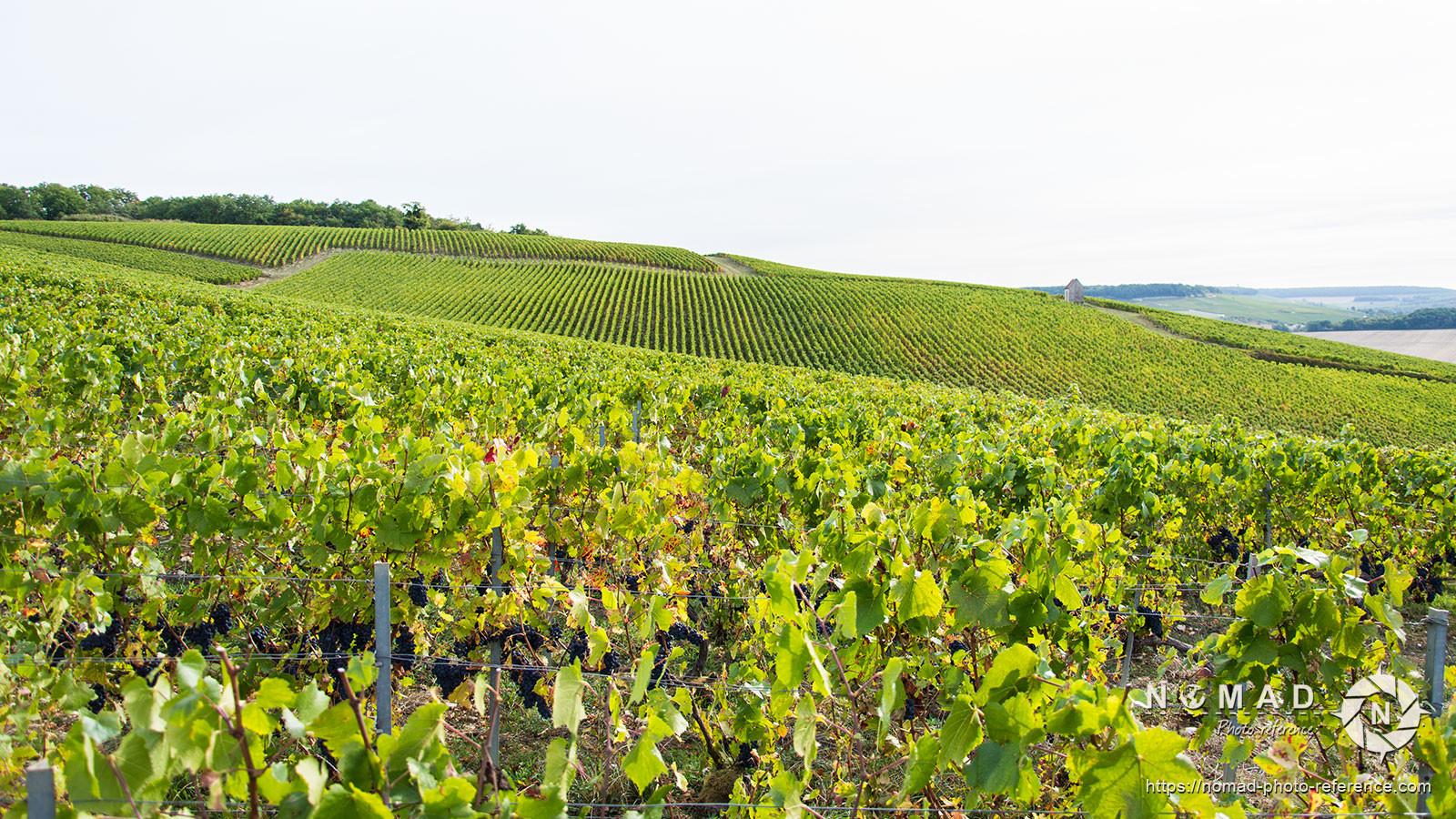 Photo reference pack vineyards volume2 06