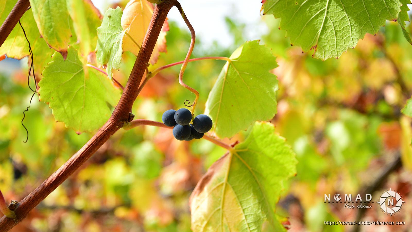 Photo reference pack vineyards volume2 08