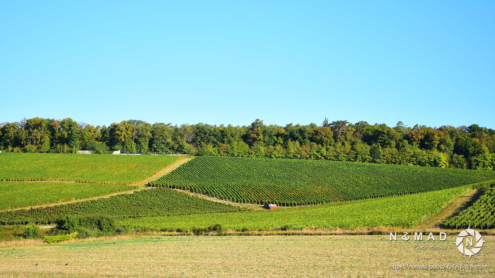 Photo reference pack vineyards volume2 10