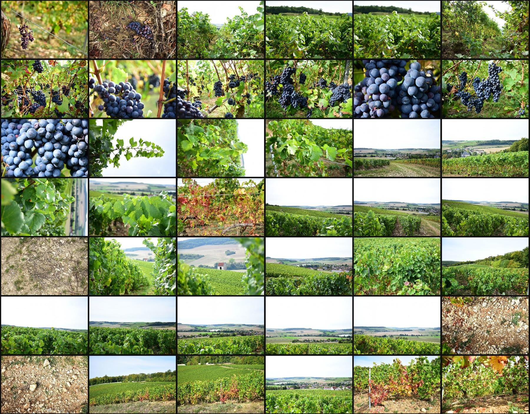 Photo reference pack vineyards volume2 12