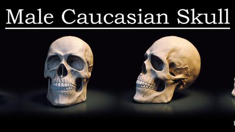 Male Caucasian Skull