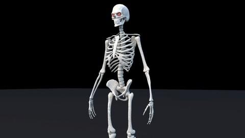 Skeleton Maya Rig
