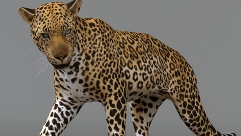 Leopard Maya Rig