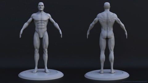Male Anatomy by Alejandro Zolis