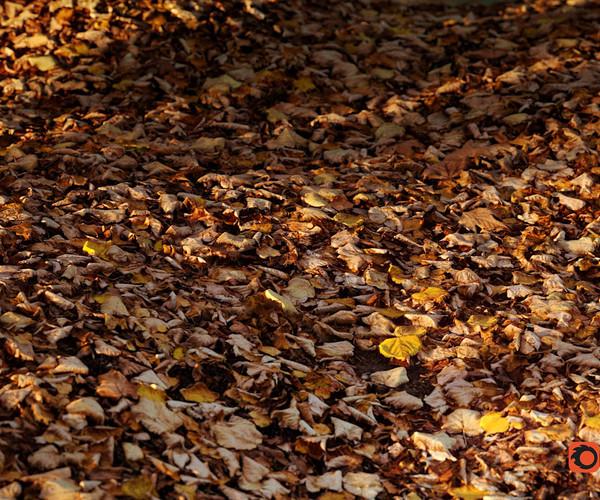 Autumn Leaves - 8k Photogrammetry PBR Textures