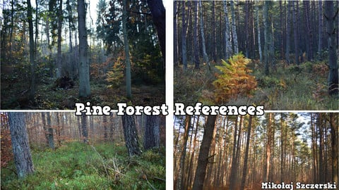 Pine Forest References Photos