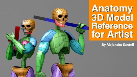 Anatomy 3D Model Reference For Artist 3D model