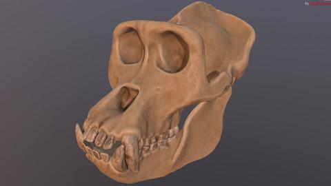Gorilla Skull (Refined Scan)