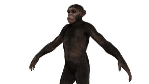 Monkey Ape Early Man 3D Character model