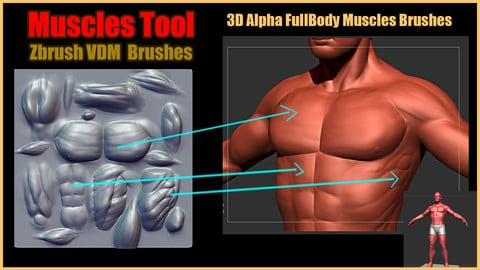 Muscles Tool For Zbrush