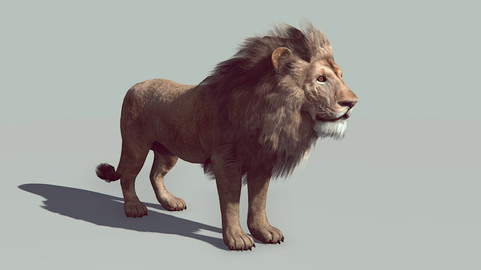 Male Lion - realtime