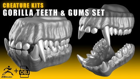 CREATURE KITS: Gorilla Teeth & Gums - High Poly OBJ File / ZBrush File with Subdivisions