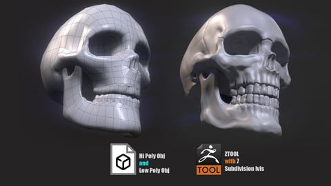 Low and Hi poly Skull