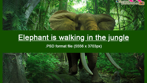 Elephant is walking in the jungle