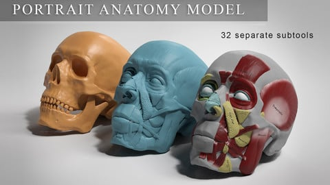 Facial Anatomy Model - Portrait Ecorché