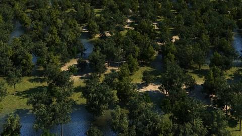Landscape Trees 01