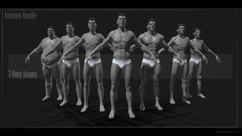 Male Anatomy Bundle