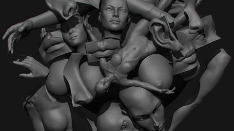 Anatomical set