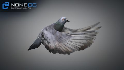 Animated Rock Dove