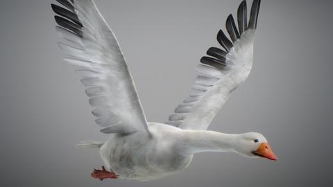 Animated Snow Goose