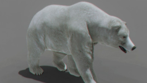 Animated Polar Bear