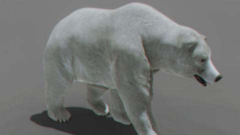 Animated Polar Bear