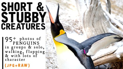 95+ Penguin Photos for Short & Stubby Creature Reference!! JPG+RAW