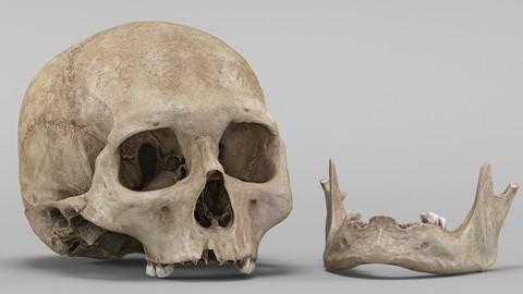 3D Real Human Skull 3D Scan