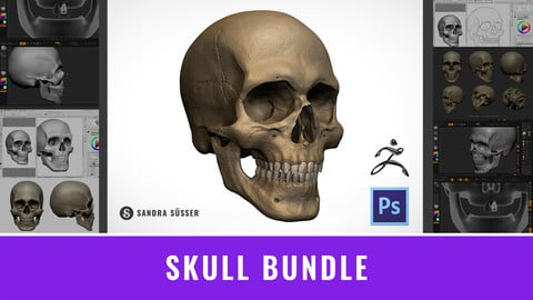 Skull Bundle – 3D Model, Timelapse Videos Zbrush & Photoshop