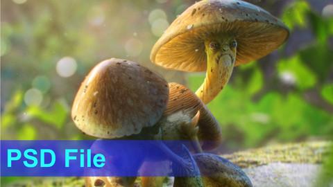 Mushroom creature concept - PSD