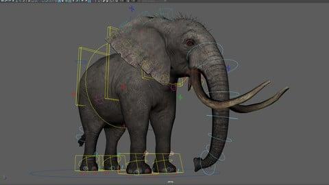 Elephant Maya Rig