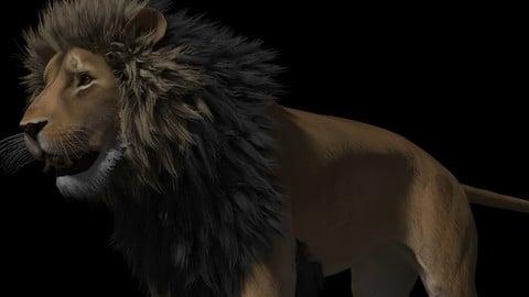 Tobias Lion Maya rig