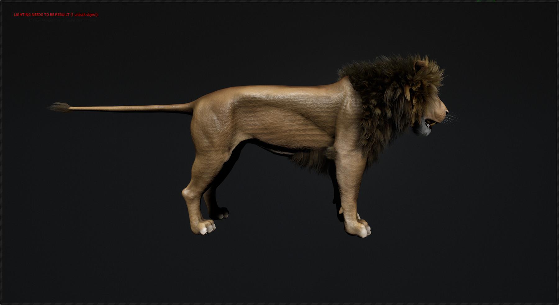Truong CG Artist - Tobias Lion Maya rig