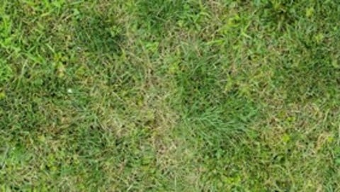 Panoramic Grass