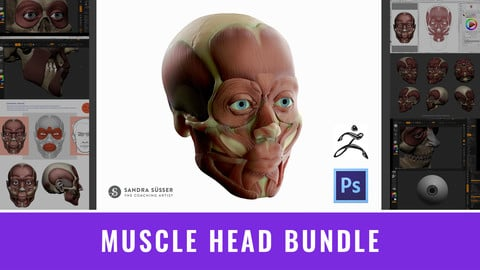 Muscle Head Bundle – 3D Model, Timelapse, Videos ZBrush & Photoshop